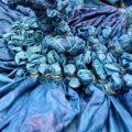Teindre des vêtements avec de l'indigo